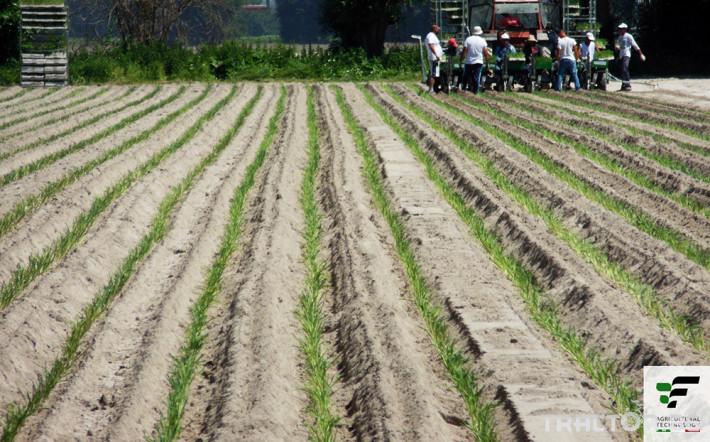 Машини за зеленчуци Полуавтоматична разсадопосадачна машина FEDELE BIG 4 - Трактор БГ