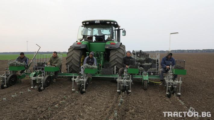 Машини за зеленчуци Разсадопосадачна машина за лавандула PLANT 0